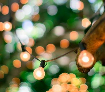 magic lighting in the garden